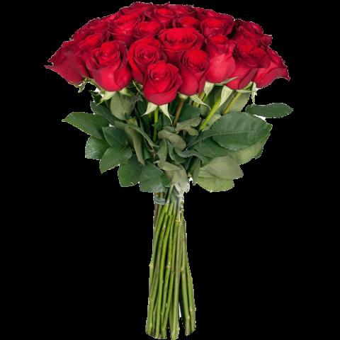 premium_red_rose-1.png