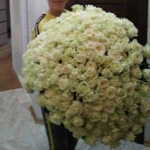 Фото товару 301 біла троянда